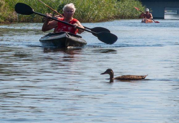 kano eend